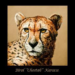 Avatar Cheetah03
