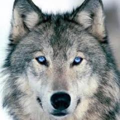 Avatar wolfsmahne